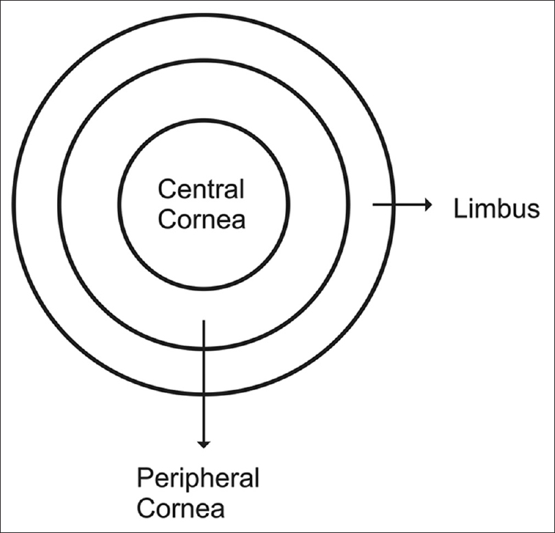 Anatomy Of Cornea And Ocular Surface Sridhar Ms